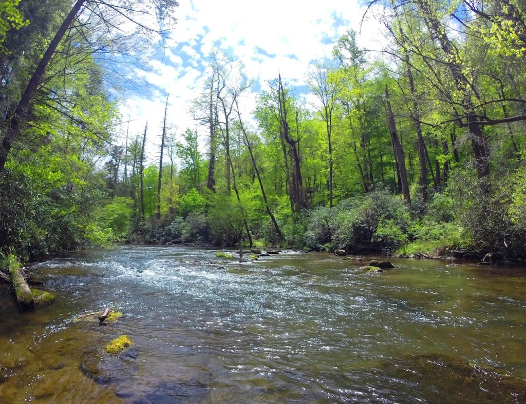 Early Spring on Abrams Creek