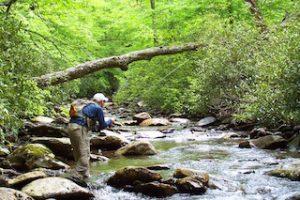 Angler in a Smoky Mountain Stream