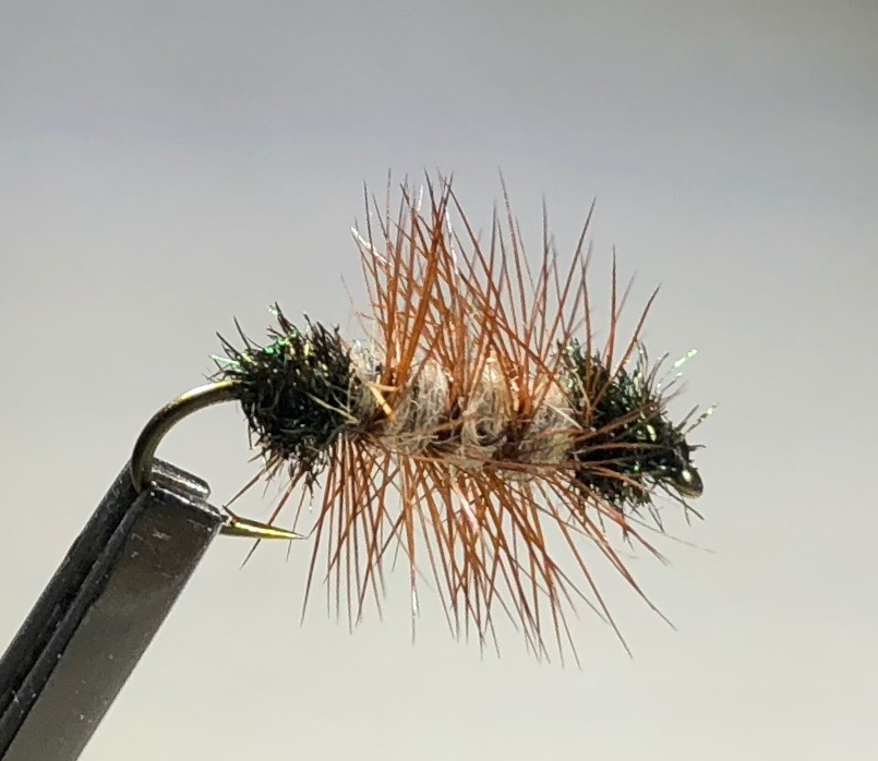 Humphreys Caddis Pupa